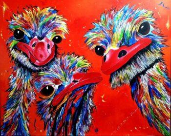 Struisvogels Rood